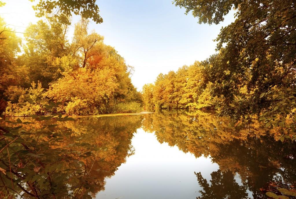 Jesensko drevje pri reki