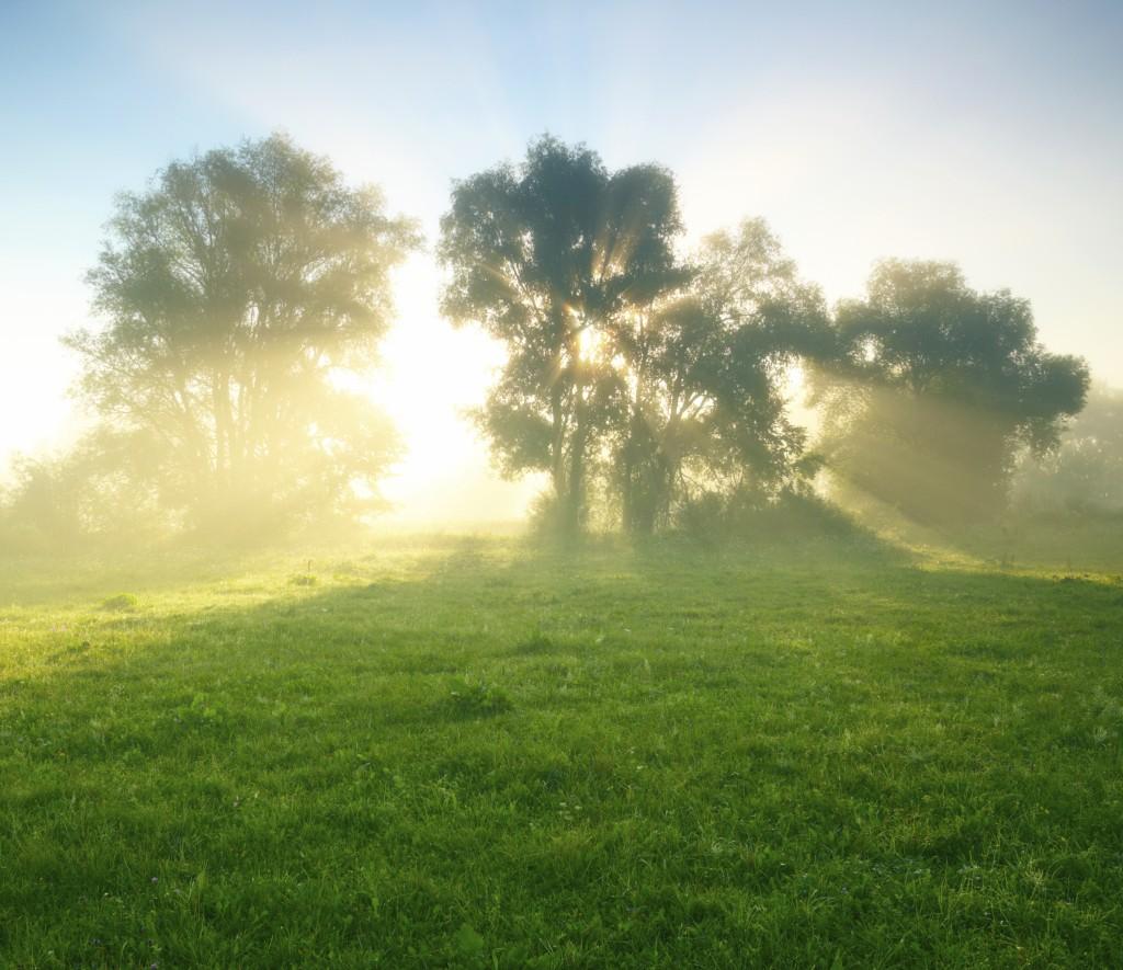 Jutranja fotografija sončnega vzhoda, dreves in travnika