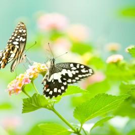 Pomladni motiv z rožo in metuljema