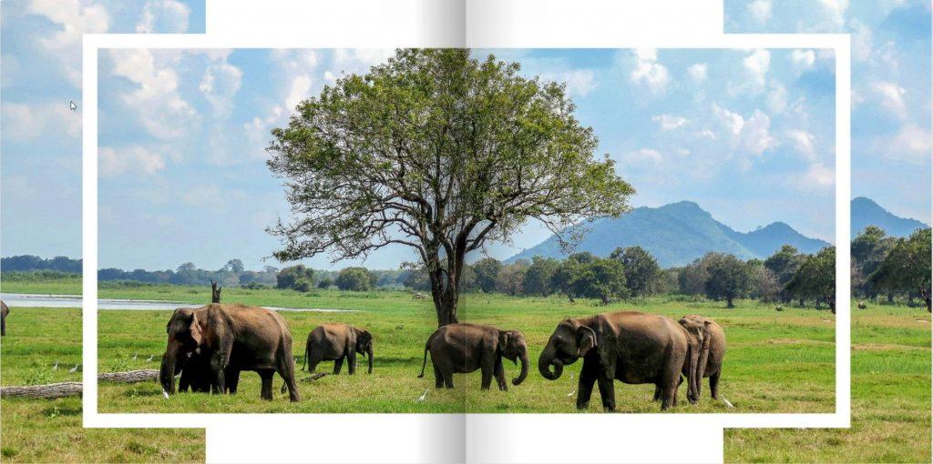 Stran v fotoknjigi Šrilanka, prikazuje slone na travniku in ob drevesu