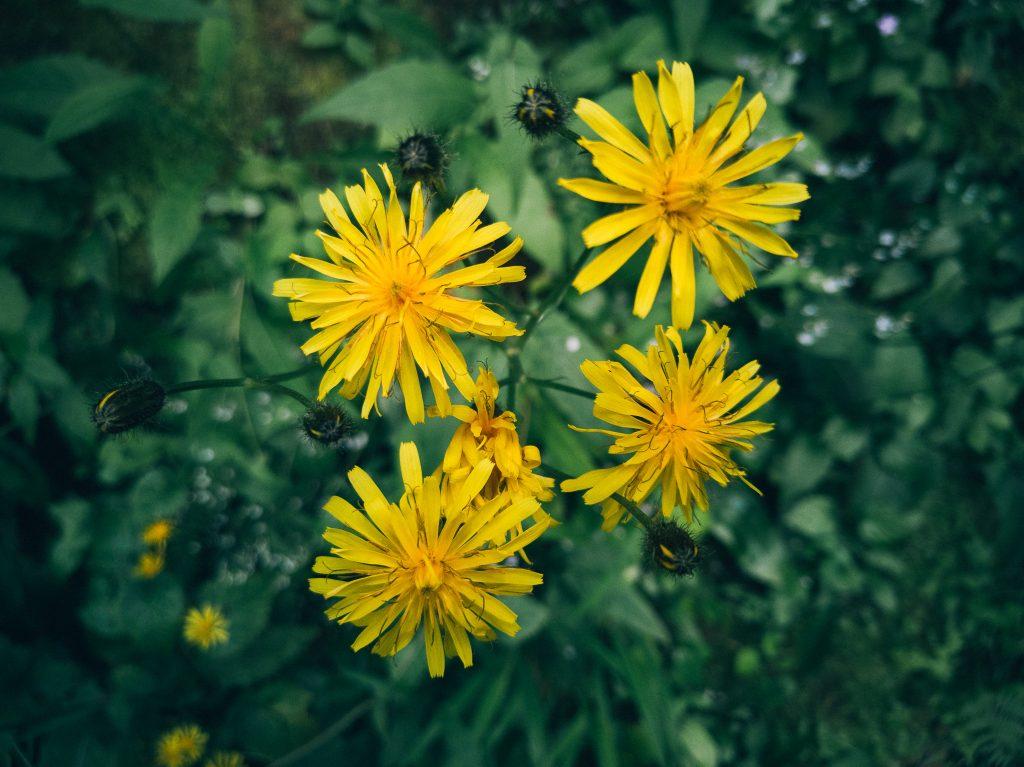 Rože na fotografiji