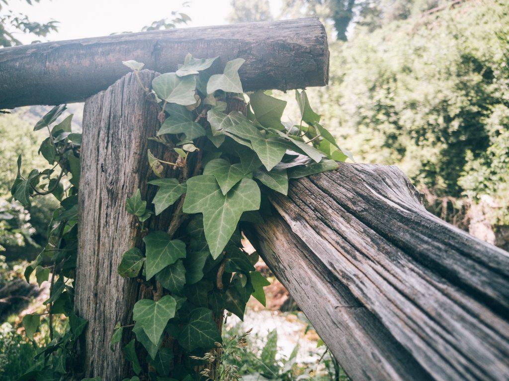 Foto s telefonom, rastlina